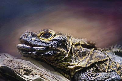 Photograph - Reptile by Michele Wright