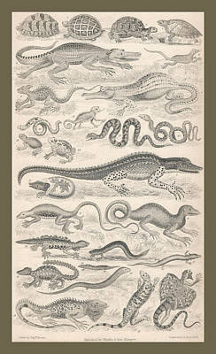 Brown Snake Drawing - Reptiles by Dreyer Wildlife Print Collections
