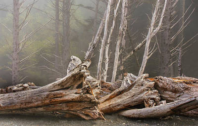 Washington Driftwood Beach Fog Wall Art - Photograph - Requiem For The Fallen by Michael Scott