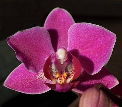 Photograph - Rescue Orchid by Richard Thomas