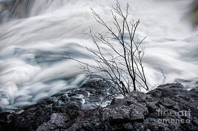 Temperance River Photograph - Resilience by April Koehler