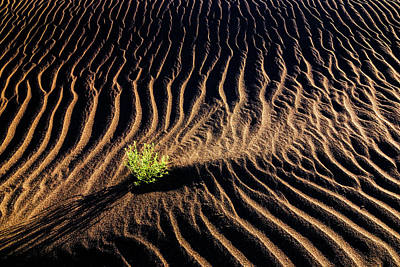 Resilient Plant Growing In Sand Art Print by Vishwanath Bhat