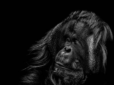 Orangutan Photograph - Respect by Paul Neville