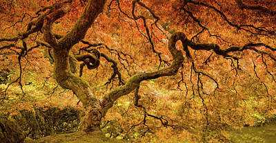 Photograph - Resplendent Maple by Don Schwartz