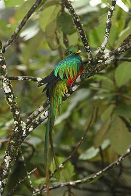 Quetzal Photograph - Resplendent Quetzal II by Bruce J Robinson