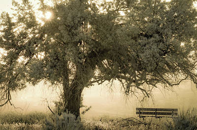 Sit And Stay Awhile Art Print by Joy McAdams