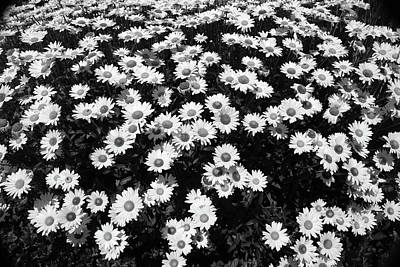 Photograph - Rest Stop Daisies 1 Bw by Mary Bedy