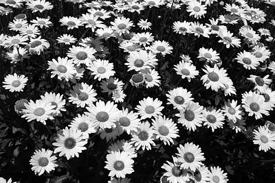 Photograph - Rest Stop Daisies 2 Bw by Mary Bedy