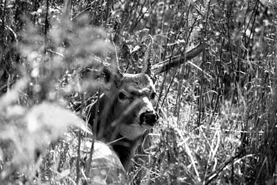 Monster Buck Photograph - Rested by Emily Stauring