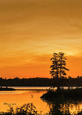 Swampland Photograph - Restful Night by Marvin Spates