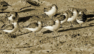 Photograph - Resting At The Beach by D Hackett