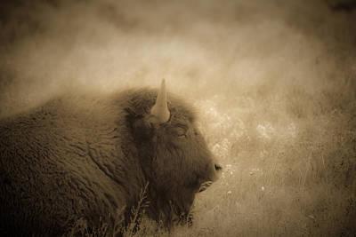 Resting Buffalo Art Print by Patrick  Flynn