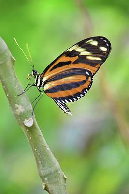 Digital Art - Resting Butterfly by Mihaela Pater