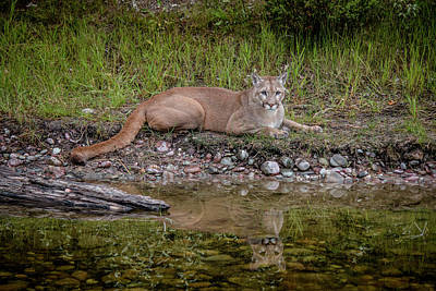 Photograph - Resting By The Pond by Teresa Wilson
