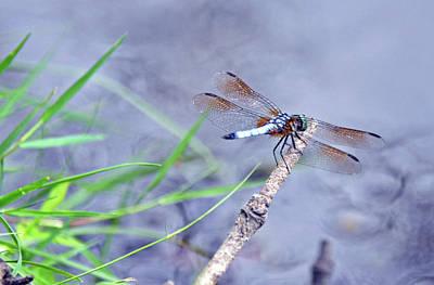 Photograph - Resting Dragonfly by Kay Lovingood
