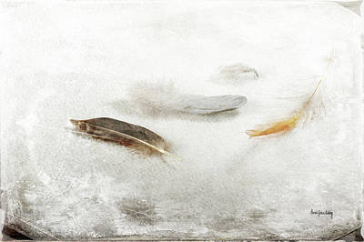 Photograph - Resting Feathers by Randi Grace Nilsberg