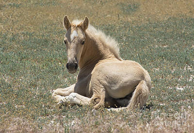 Resting Filly Art Print by Nicole Markmann Nelson
