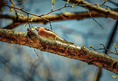 Photograph - Resting #g3 by Leif Sohlman