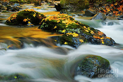 Photograph - Resting Gold by Mike Dawson