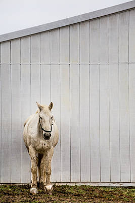 Photograph - Resting Horse 1 by Karen Saunders