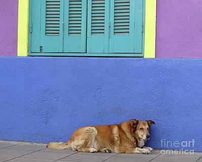 Photograph - Resting In Boca by PJ Boylan