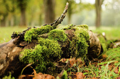 Photograph - Resting In The Forest by Miguel Winterpacht