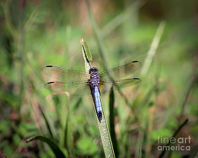 Dragonfly Photograph - Resting In The Green by Kerri Farley
