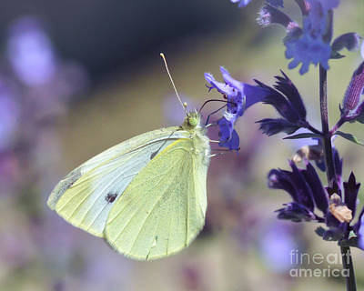 Photograph - Resting In The Purple by Kerri Farley