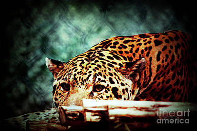 Photograph - Resting Jaguar by Inspirational Photo Creations Audrey Taylor