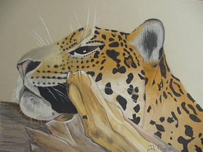 Resting Leopard Art Print by Debbie Payne
