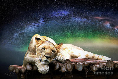 Photograph - Resting Lion by Inspirational Photo Creations Audrey Taylor