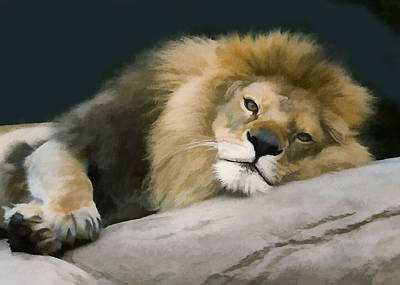 Photograph - Resting Lion by Sharon Foster