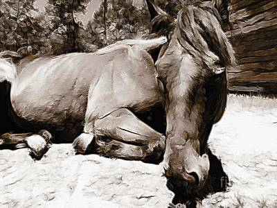 Photograph - Resting Mare by Paul Wilford