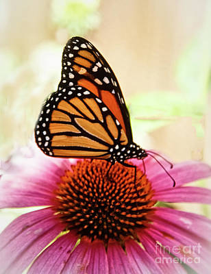 Resting Monarch Butterfly Art Print by Robert Bales