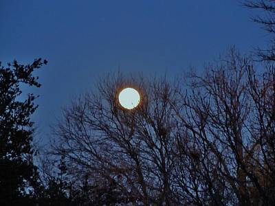Bed Spread Photograph - Resting Moon In The Trees by Donna Wilson