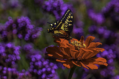 Butterfly Photograph - Resting On A Red Flower by Garry Gay
