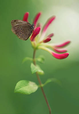Photograph - Resting On The Pink Plant by Jaroslaw Blaminsky