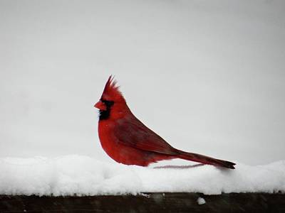 Photograph - Resting On The Snow by Jenny Regan