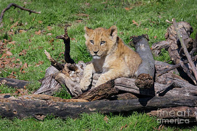 Photograph - Resting On A Woodpile by Karen Jorstad