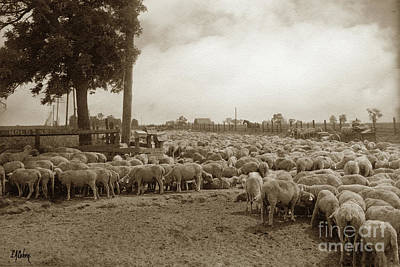 Photograph - Resting On Trip To New Pasture, Stockton May 24, 1909 by California Views Mr Pat Hathaway Archives