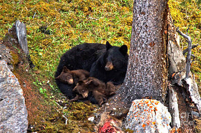 Photograph - Resting Peacefully In Jasper by Adam Jewell