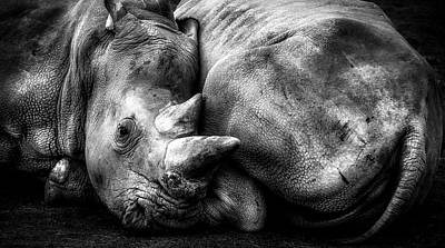 Photograph - Resting Rhinos by Pixabay