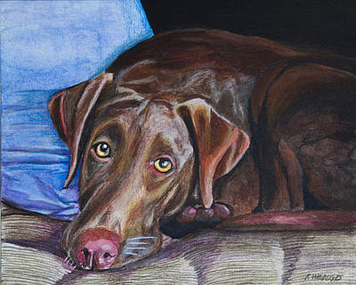 Chocolate Lab Painting - Resting by Roger Wedegis