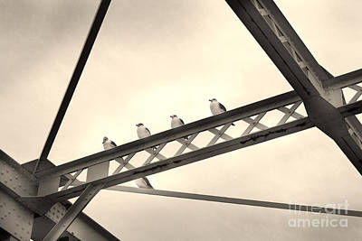 Photograph - Resting Seagulls by Eena Bo