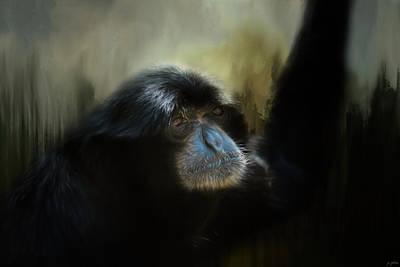Photograph - Resting Siamang Ape by Jai Johnson