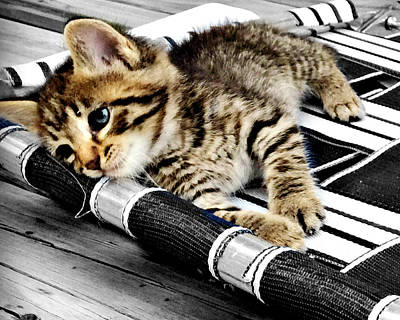 Photograph - Resting Taby Kitten by Kathy M Krause