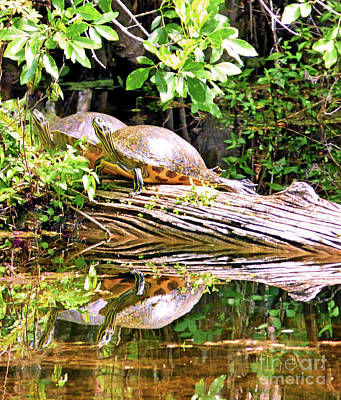 Resting Turtles Art Print by Sharon Eng