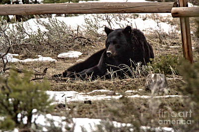 Photograph - Resting Under The Fence by Adam Jewell