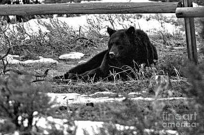 Photograph - Resting Under The Fence Black And White by Adam Jewell