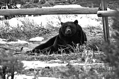 Photograph - Resting Under The Wooden Fence Black And White by Adam Jewell